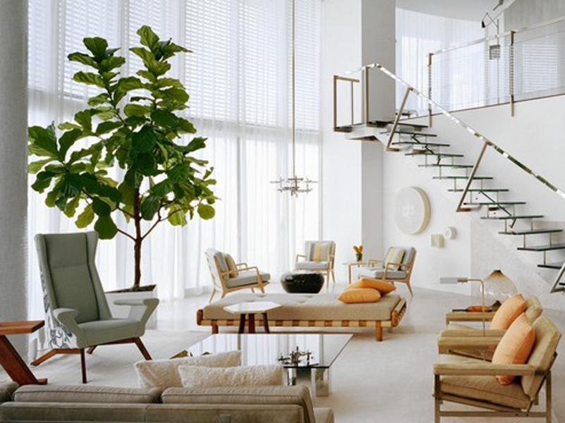 Giant-Potted-Fig-Tree-in-large-living-room-design