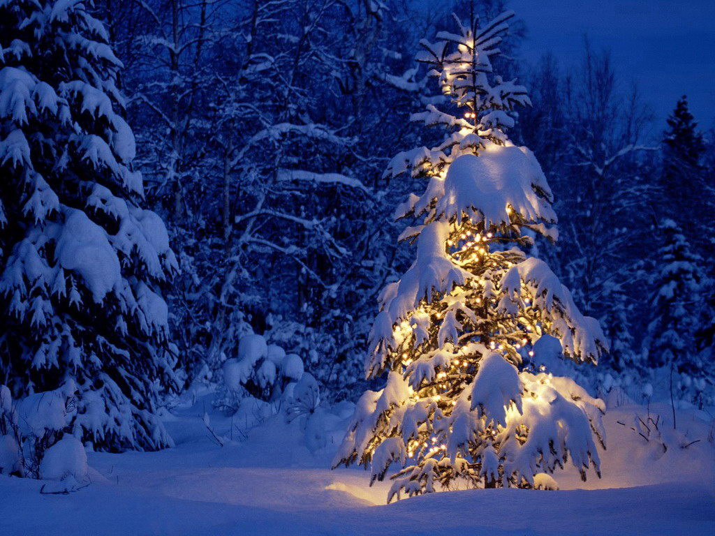 Beautiful-Christmas-Trees-32