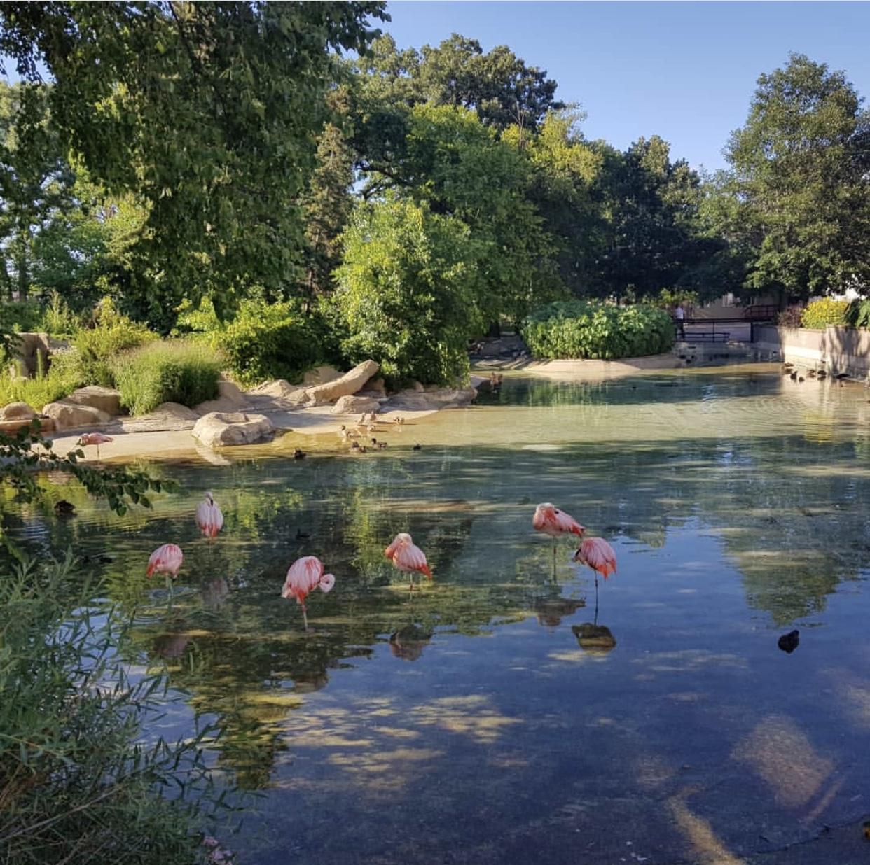 Minnesota-como-zoo